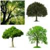 Tree Planting Fund