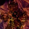 Heruka Chakrasamvara Fire Puja