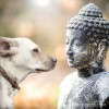 Pet Bereavement Puja
