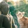 Pet Puja For Healing